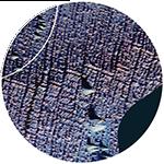 Nairobi Venn Diagram